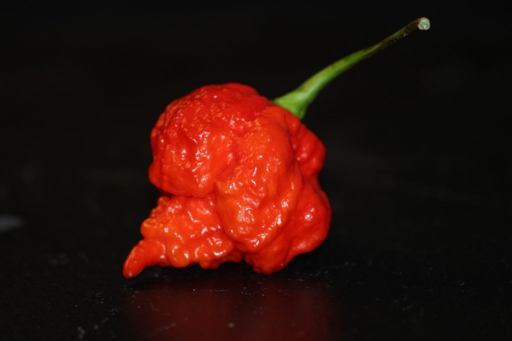 Some of the chillies we use - Trinidad Scorpion