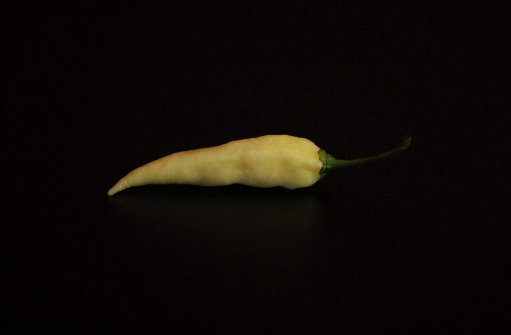 White Naga Viper Chilli